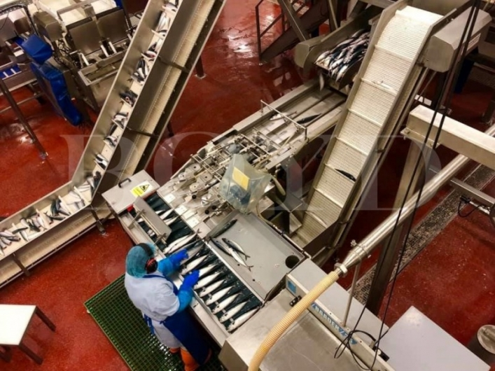 Baader 35 Complete Fish Filleting Lines with autofeeders and skinners