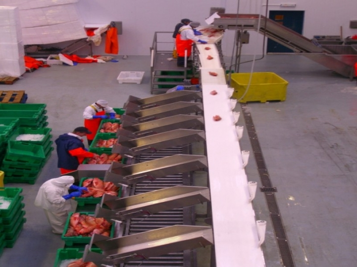 Marel 7100 Whole Fish Grader
