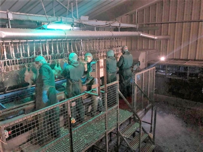 Anglia Autoflow EASYLOAD for live chickens - 2016