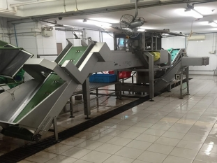 Onion Processing Line